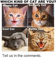 Happy Cat Meme - which kind of cat are you happy cat scaredy cat battle cat cool cat