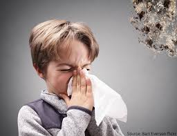 Types Of Mold In Bathroom by The Health Effects Of Mold On Children
