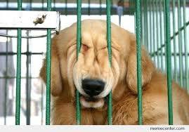 Smiling Dog Meme - smiling dog by ben meme center