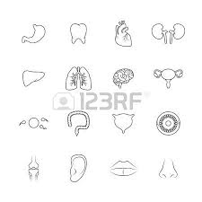 human organs outline icons set of liver lips ear isolated vector