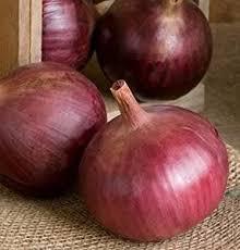 71 best onions images on pinterest garden seeds vegetables