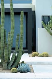 best 25 cacti garden ideas on pinterest cactus colorful