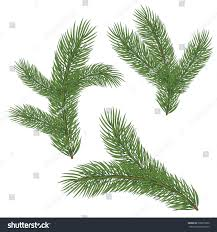 spruce branch cones vector illustration isolated stock vector