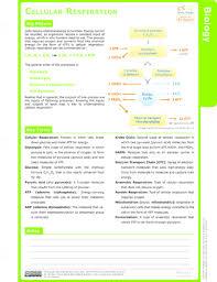 cellular respiration ck 12 foundation