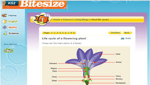 st clare u0027s class blog science homework parts of a flower