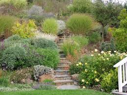 ornamental grass hillside