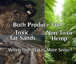 Canapã En Pin Hemp Canapa Biofuel Hemp Canapa Cannabis