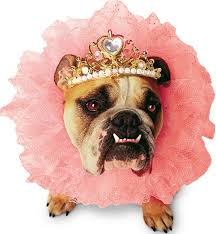 Halloween Costumes English Bulldogs 10 Halloween Costumes Perfect Humiliating Dog