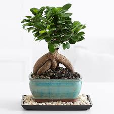 low light plants for office plants for him