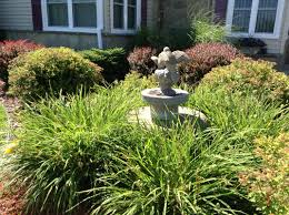 Low Maintenance Plants And Flowers - gardening for pest control growing shrubs and bushes low