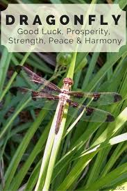 Meaning Of Home Decor Best 25 Dragonfly Meaning Ideas On Pinterest Spirit Meaning