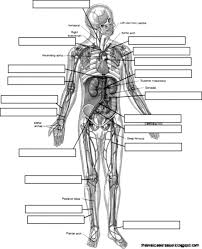 best anatomy u0026 physiology coloring workbook answers gallery new