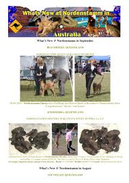belgian shepherd qld what u0027s new archives nordenstamm malinois
