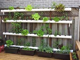 growing a vertical garden and ideas to get you started