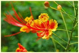singapore botanic gardens u2013 compass u0026 camera