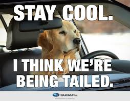 Dog In Car Meme - dog tested dog approved funnymemes puertorican jokes etc