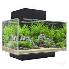 fluval edge aquarium fish tank