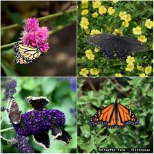 native mexican plants butterfly farms san diego
