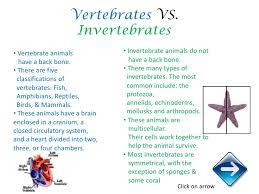 images of invertebrates and vertebrates images sc