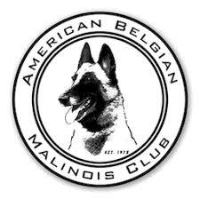 belgian malinois rescue florida abmc u2013 american belgian malinois club