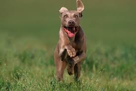 hyperactive dogs 5 tips for a hyperactive dog american kennel club
