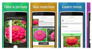 Identify Flowers - gardening apps to help identify plants