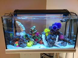 what are the saltwater aquarium mistakes and how do you