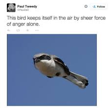 Hawkward Meme - a flock of 45 memes about birds that might make things a little