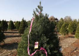 owasso christmas tree farm doesn u0027t expect to feel the pain of tree