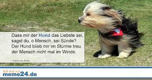 sprüche hund treue die treue eines hundes meme24 de