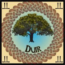 oak tree in celtic mythology calling