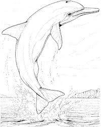 coloriage dauphin à imprimer