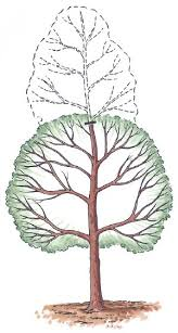 pruning trees shrubs and vines howstuffworks