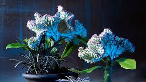 top freaky u0026 carnivorous plants sunset