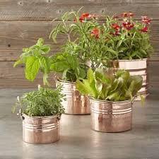 planters u0026 pots williams sonoma