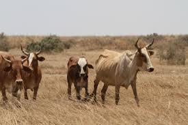 Aiz Bad Honnef Liportal Mauretanien Wirtschaft U0026 Entwicklung Das