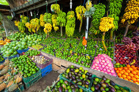 tropical fruits in malaysia great fruits of malaysia