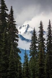 Elwha Dam Rv Park Reviews by Best 25 Hurricane Ridge Ideas On Pinterest Olympic Mountains