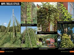 Hops On Trellis The Homebrewer U0027s Garden 2nd Edition How To Grow Prepare U0026 Use