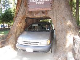 Chandelier Drive Through Tree Nate U0027s Nonsense Kitschy California