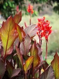 191 best zone 3 gardening images on pinterest flower gardening