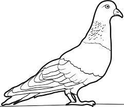 pigeons coloring pages ideas printable pigeon coloring