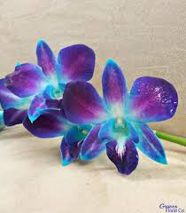 blue and purple orchids pesona bunga orchid flowers and flower
