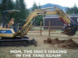 Heavy Equipment Memes - 51 best funny pets images on pinterest beautiful calendar and