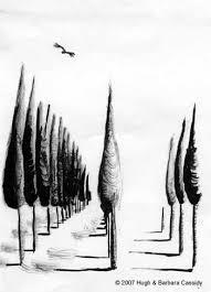 eva cassidy artwork cedar trees sketch