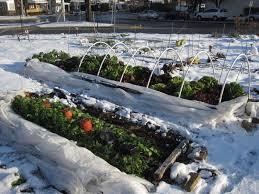beautiful winter vegetable garden curbsidecroft com