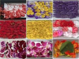 les fleurs comestibles en cuisine cuisinons les fleurs