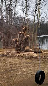 tree removal professional home repair