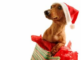 cute dog christmas wallpapers christmas dog pictures wallpaper wallpapersafari