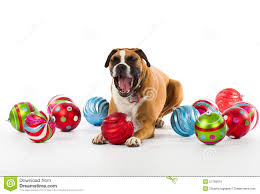 boxer with ornaments stock photo image 27769076
